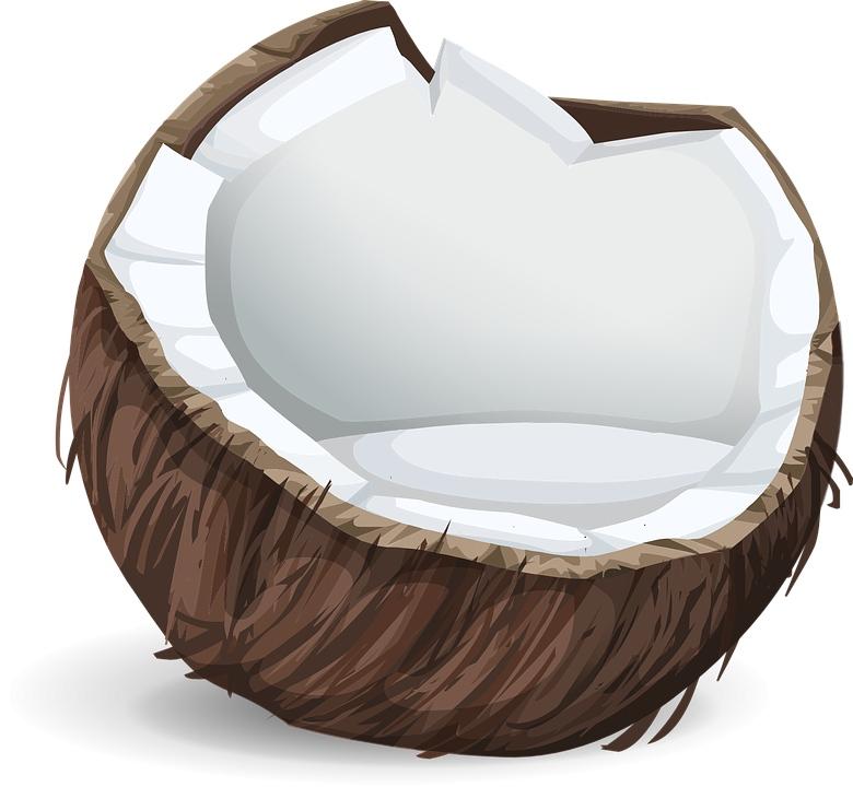 白斑马椰子在哪买怎样才能买到白斑马